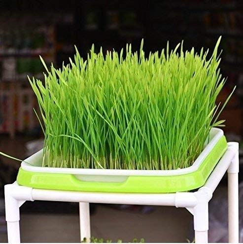 Grass-Sprout-Dish-Tray-Vegetable-Planting-Seed-Rack